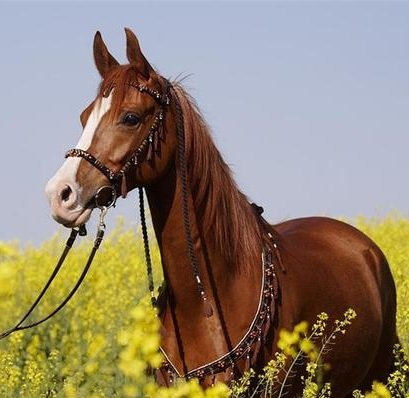 Содержание лошадей и болезни лошадей