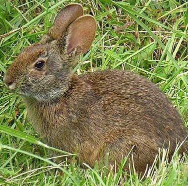 Обустройство клетки для домашнего кролика
