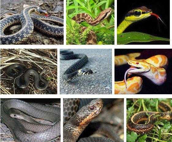 Змеи — рожденные ползать