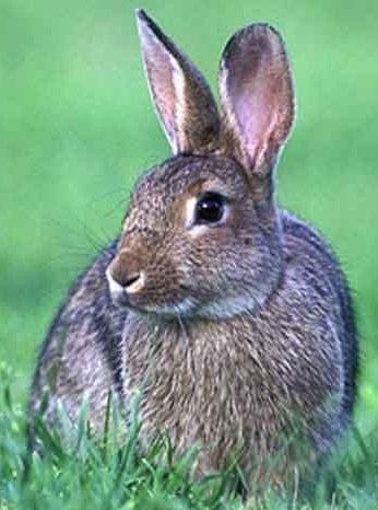 Зайцеобразные – описание вида, фото и видео