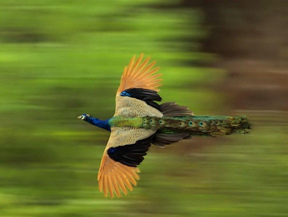 Как летают птицы виды полета птиц