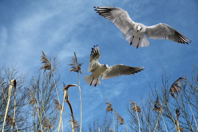 Как летают птицы? Виды полета.