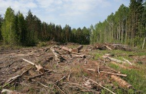 Уничтожение лесов в России