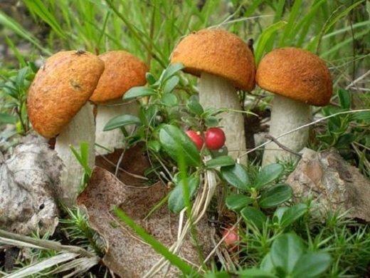 История изучения грибов