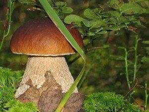 Значение грибов в природе жизни человека