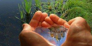 Какая бывает вода в природе на Земле