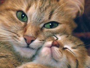 Кошка как священное животное в разных странах