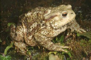 Лягушки и жабы