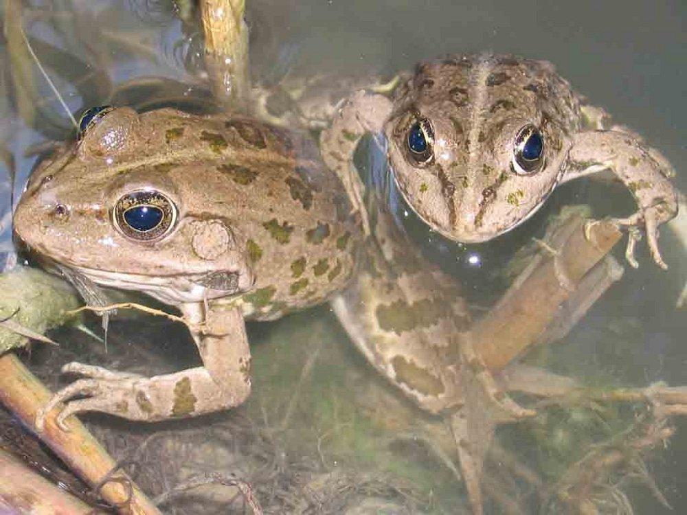 Лягушки и жабы развитие и жизнь