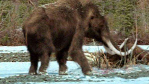 Нашли живого мамонта в Сибири под Якутском.