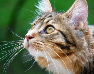 Кот после дачного сезона