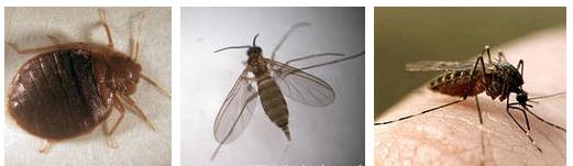 Кровососущие насекомые