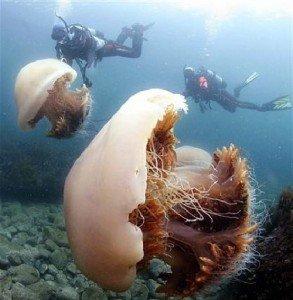 Как передвигаются медузы