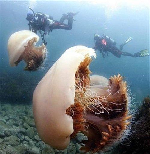 Как передвигаются медузы — двигательная система
