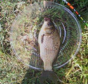 Рыбалка на карася приманкой на сладости
