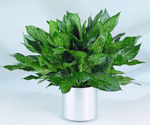 Комнатные растения, которым не нужен солнечный свет