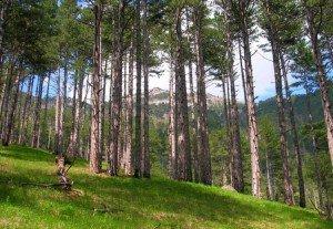 Чем полезен лес для человека