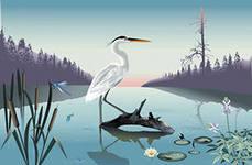 Цапля – описание птицы, фото и видео