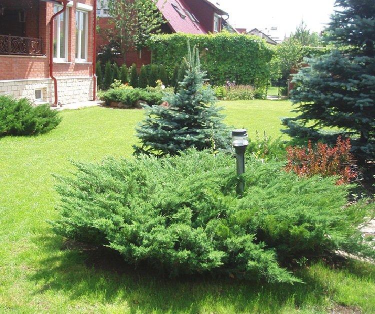 Деревья и кустарники в оформлении ландшафта