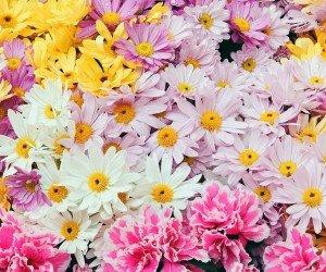 Любовь растительном мире
