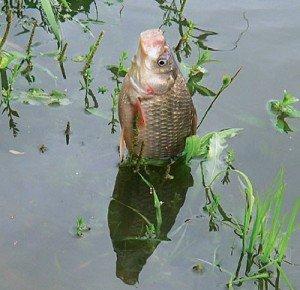 Особенности рыбалки на карася