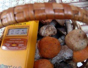 Радиоактивные грибы впитывают радиацию