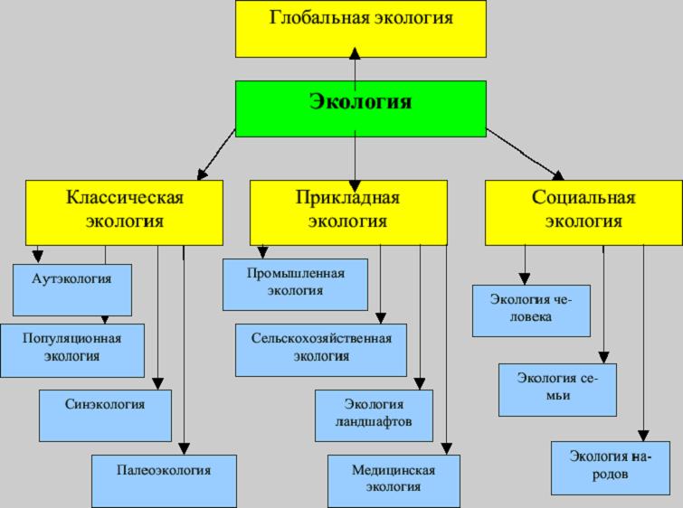 Структура современной экологии и ее место в системе наук