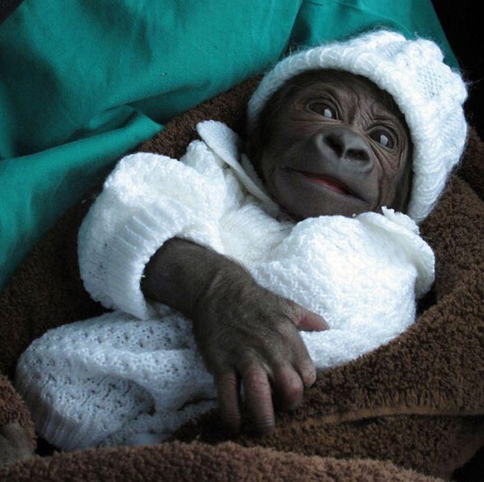Рождение гориллы в Берлинском зоопарке