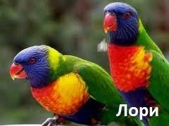 Отряд попугаи – описание птиц, фото и видео