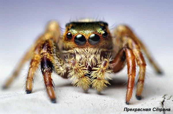 Зрение и глаза у живых организмов