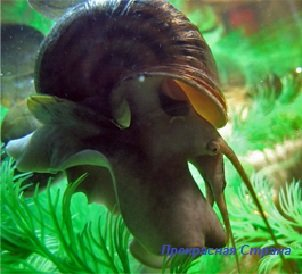 Двустворчатые моллюски и улитки