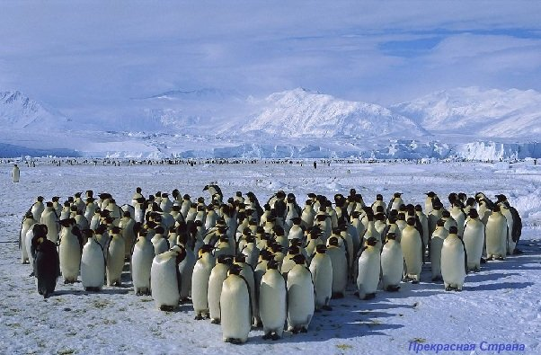 Арктика и Антарктида — Южный и Северный полюсы