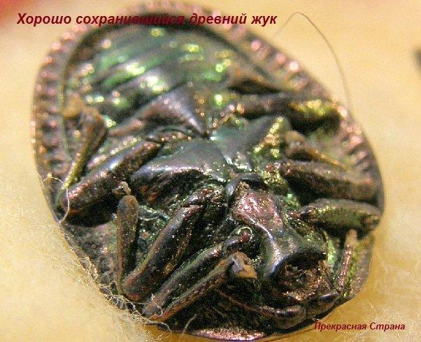 Древние жуки и разнообразие древних жуков