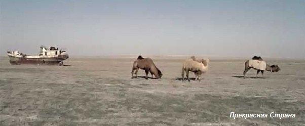 Аральское море - верблюды и корабль - это дно высыхающего моря