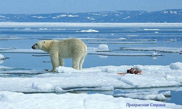 Арктика и Антарктида