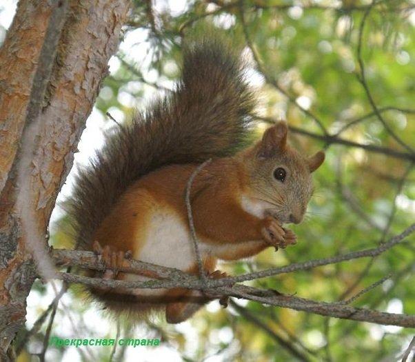 Древесные грызуны - белки и дикобразы