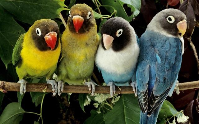 Домашние опасности для комнатных птиц.