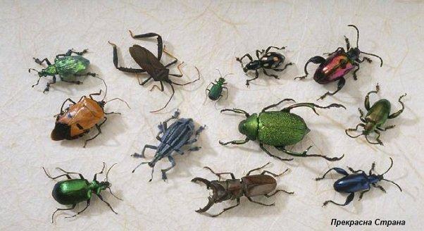 Сколько существует видов жуков