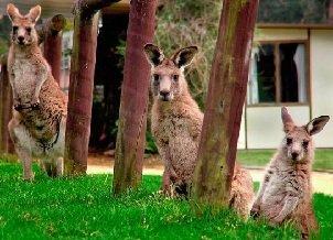 Сумчатые животные — особенности строения