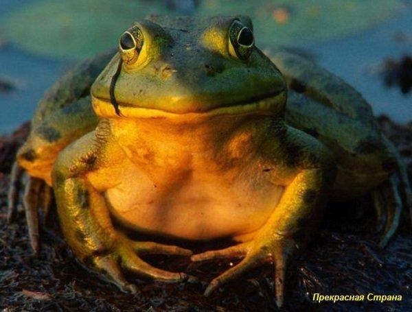 Почему лягушки не замерзают зимой