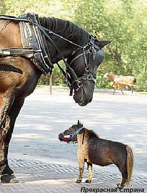 Карликовая лошадка
