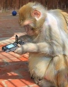 Самые умные животные в мире
