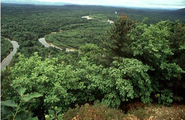 Широколиственные леса Дальнего Востока
