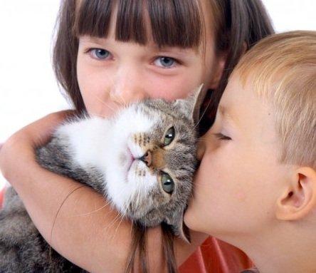 Как правильно ухаживать за кошками с артритом