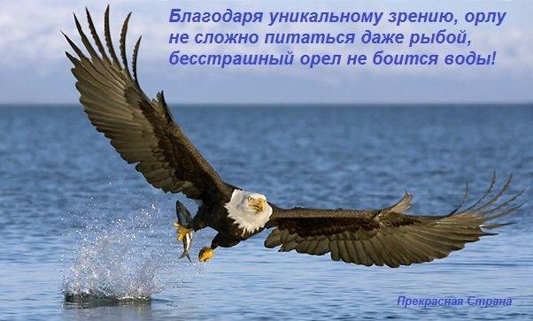 Зрение орла считается самым лучшим в мире