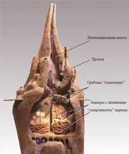 Как устроены термитники - жизнь термитов