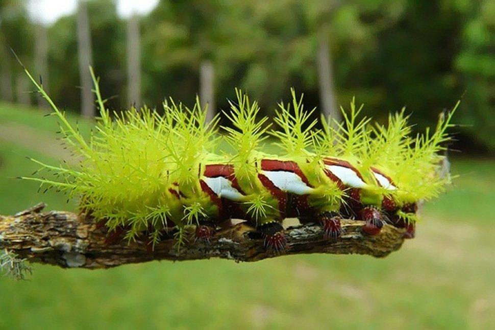 Самые опасные насекомые земного шара
