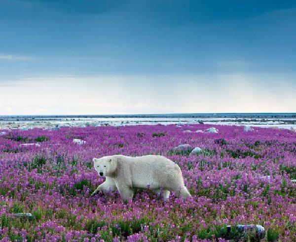 Природа Арктики и окружающая среда