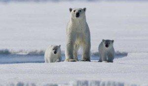 Природные ресурсы Арктики России