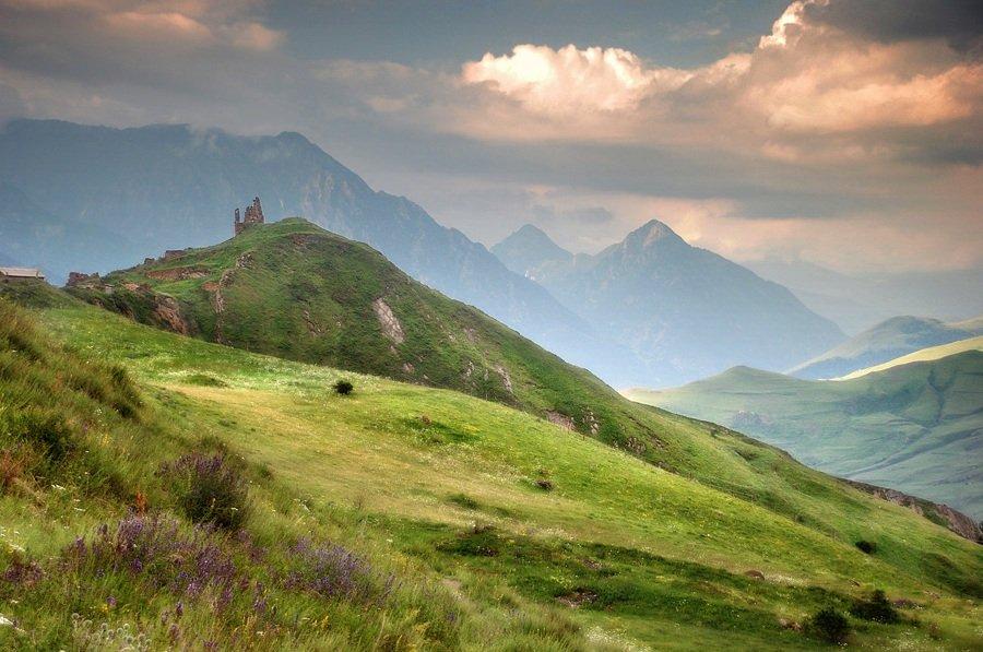 Растительность и животный мир Северной Осетии